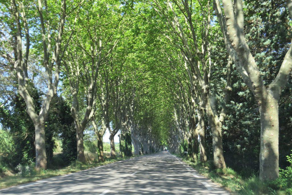 St-Rémy-de-Provence Túnel de árvores