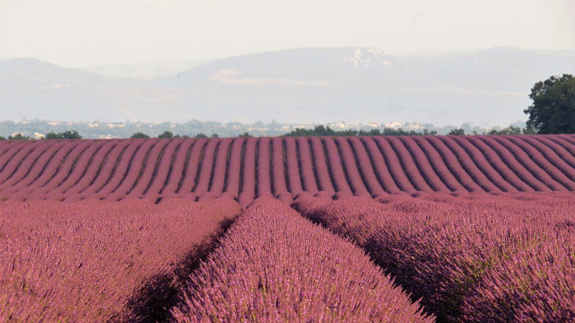 Provence: Campos de Lavanda e Gorges du Verdon
