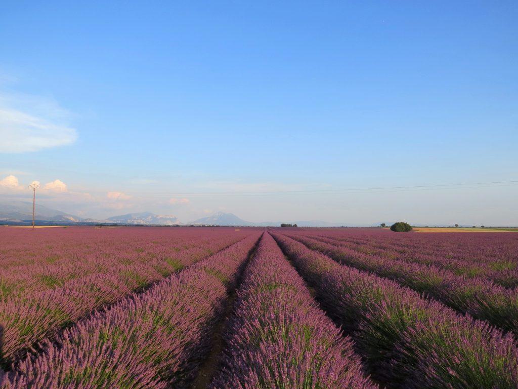 Lavandas Provence